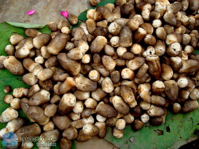 khmer fruit and vegetable dictionary